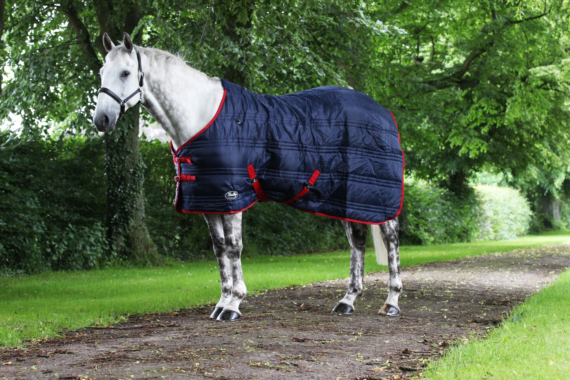 Gallop Defender 200 Stable Rug  - Thomas Irving's equestrian and accessories store  Gallop Defender 200 Stable Rug