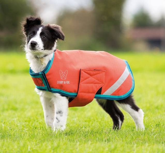 Shires Digby & Fox Waterproof Dog Coat  - Thomas Irving's equestrian and accessories store  Shires Digby & Fox Waterproof Dog Coat