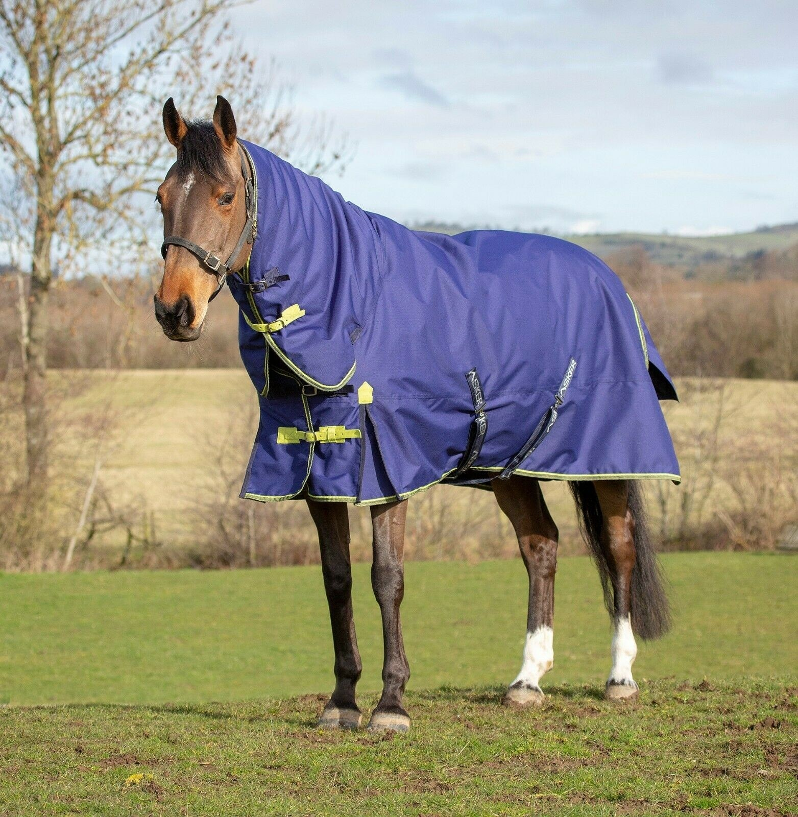 Asker 200g Turnout Rug  - Thomas Irving's equestrian and accessories store  Asker 200g Combo Turnout Rug