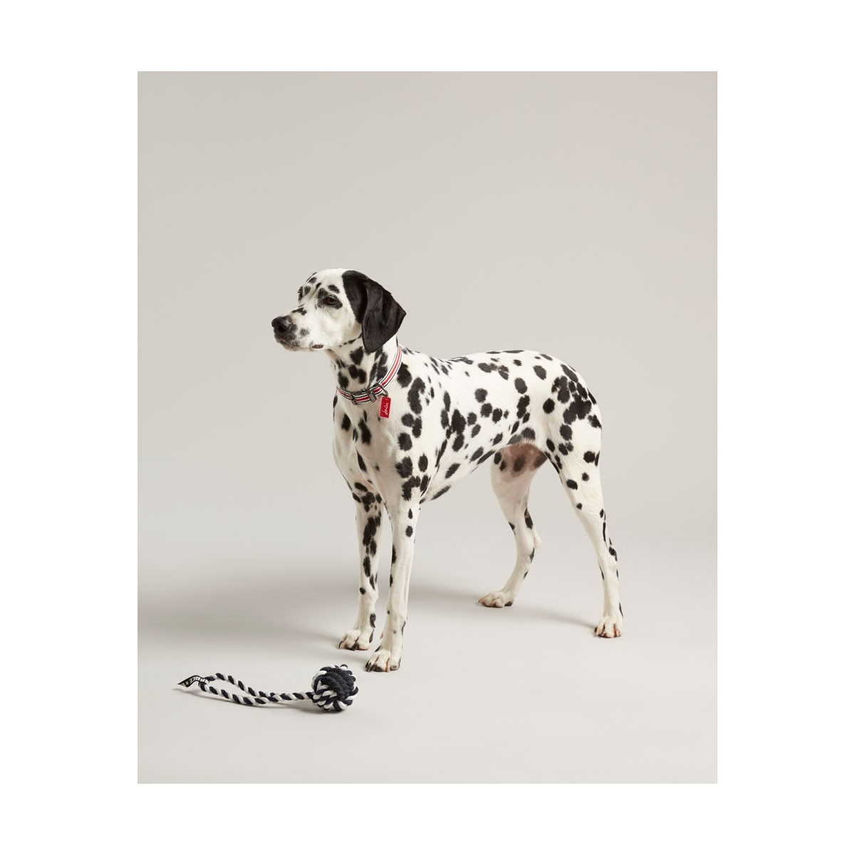 Joules Rubber and Rope Dog Toy  - Thomas Irving's equestrian and accessories store  Joules Rubber and Rope Dog Toy