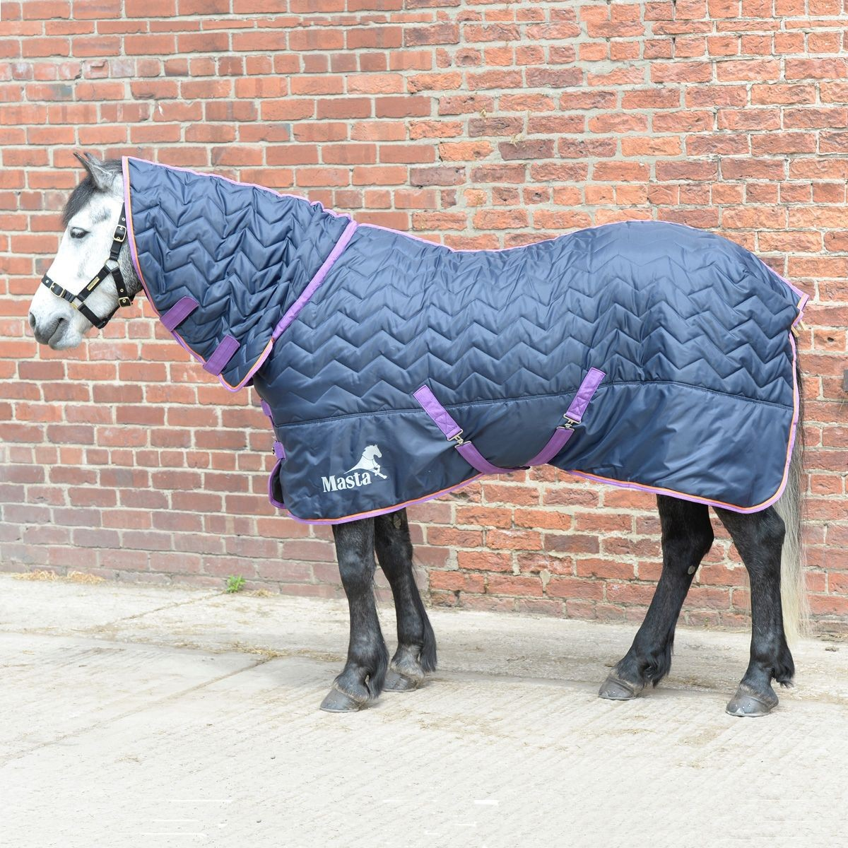 Masta Avante 120g Fixed Neck Stable Rug  - Thomas Irving's equestrian and accessories store  Masta Avante 120g Fixed Neck Stable Rug