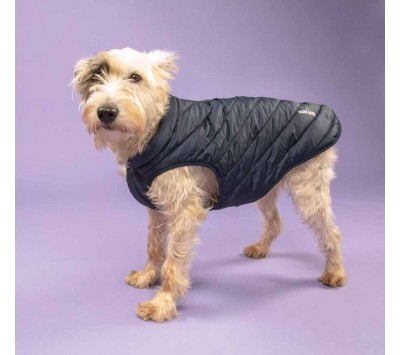 Shires Digby & Fox Padded Dog Coat