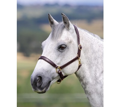 Shires Blenheim Ragley Lined Leather Headcollar