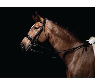 Caldene Patent Padded Dressage Double Bridle