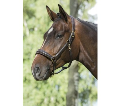 Mountain Horse Leather Headcollar